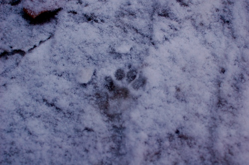 paw in snow